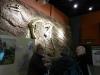 dinosaur-isle-museum