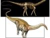 Apatosaurus by Davide Bonadonna